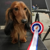 Dogshow-Zwolle-foto-2
